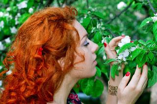 Toma in apple garden